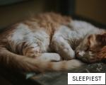 SLEEPIEST anagram