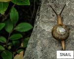 SNAIL anagram
