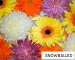 SNOWBALLED anagram