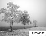 SNOWIEST anagram