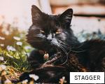 STAGGER anagram