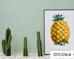 SYCONIA anagram