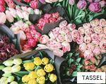 TASSEL anagram
