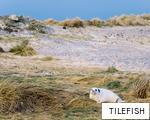 TILEFISH anagram