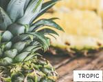 TROPIC anagram