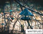 WHITEFLIES anagram