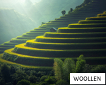 WOOLLEN anagram